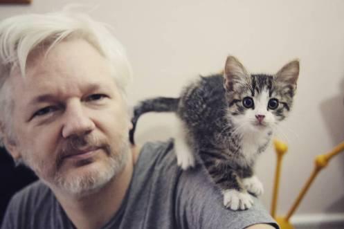 julian-assange-with-embassy-cat